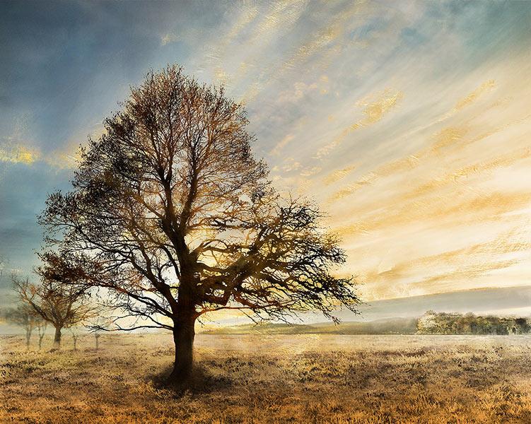 Πίνακας-τοίχου-καμβάς-Δέντρο-80X100